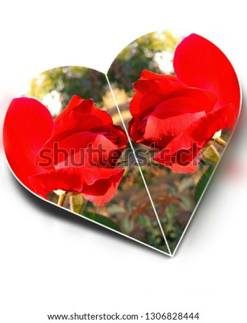 Valentine's day special flower gift for your love,a rose show its beauty and love for you your precious .