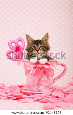 Valentine theme Maine Coon kitten in pink cup with heart