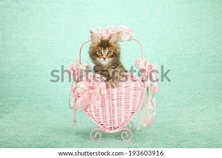 Valentine theme Maine Coon kitten sitting inside pink heart shaped basket decorated with pink bows and ribbons on mint green background