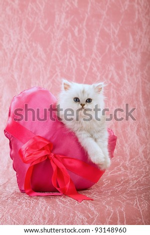 Valentine theme Silver Chinchilla Persian kitten with pink heart shape cushion