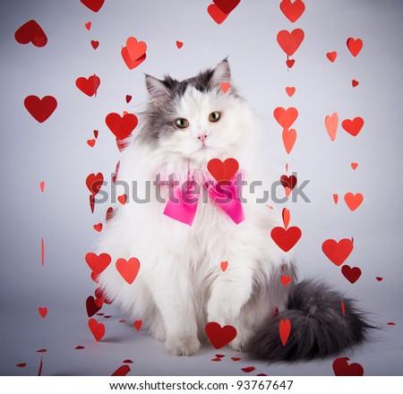 Valentine Valentine's Day