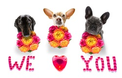 valentines mothers and fathers day group of dogs with love flowers, isolated on white background or wedding