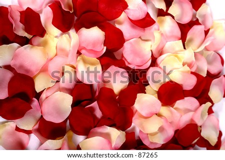 Valentines Rose petals - stock photo