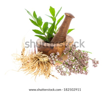 valerian (Valeriana officinalis) - rhizome, blossoms and leafs with mortar on white background Сток-фото ©