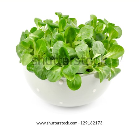 Valerianella lettuce isolated. salad