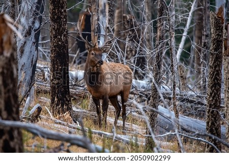 Valles Caldera National Preserve is one of New Mexico's premier elk hunting locations Stock fotó ©