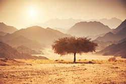 Valley in the desert with an acacia tree with mountain rock and sun in the background