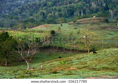 Valley in the mountains, Cuba, Cuban landscape with green grass and palms, green grass field, summer time, green nature background,morning calm in Cuba