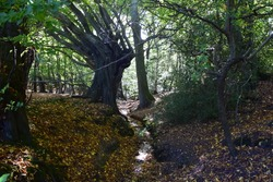 Valley of the Damned - Epping Forest, England