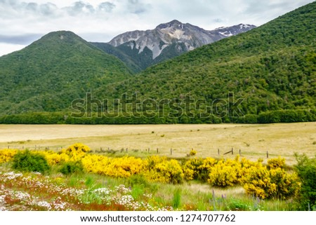 Valley scene in summer with many wildflowers near fence and ranchland at edge of wooded mountainsides in the Canterbury region of the South Island of New Zealand, with digital oil-painting effect