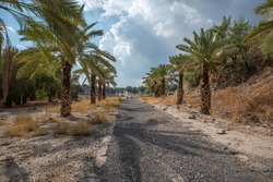 Valley Street the palm tree lined street leading back to the ruins at Beit She'an in Israel