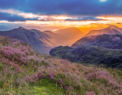 valley view of Glencoe, highlands, Scotland at sunrise. heather and vibrant colours of the glen at sunrise.