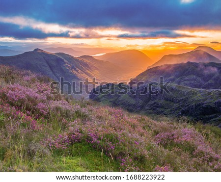 valley view of Glencoe, highlands, Scotland at sunrise. heather and vibrant colours of the glen at sunrise. Foto stock ©