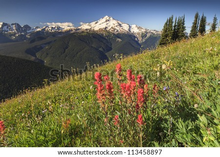 Valley with flowers and mountain in the background