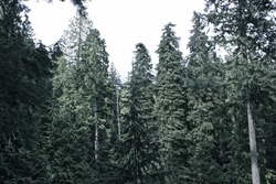Vancouver island moody forest trees