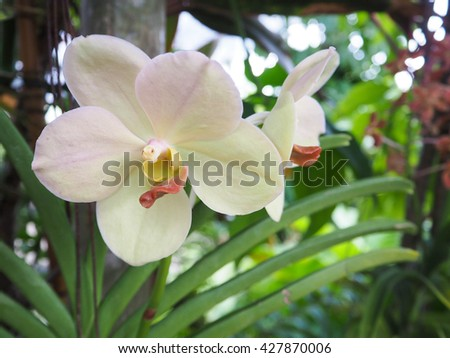 Vanda orchid in garden  #427870006