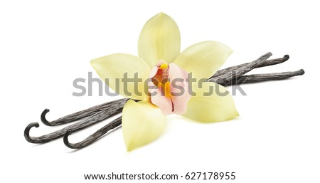 Vanilla bean flower horizontal isolated on white background as package design element