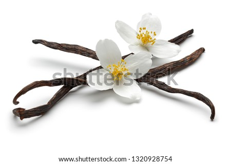 Vanilla bean with jasmine flowers, isolated on white background