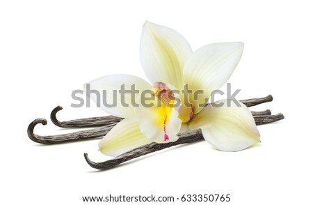 Vanilla beautiful flower stick isolated on white background as package design element
