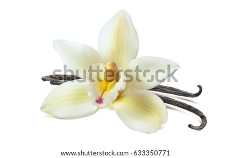 Vanilla flower 2 beans isolated on white background as package design element