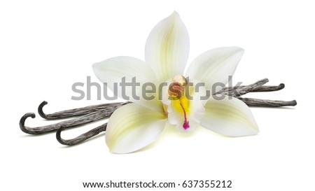 Vanilla flower in the center on beans isolated on white background as package design element