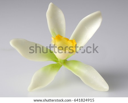 VANILLA FLOWER ISOLATED ON GRAY