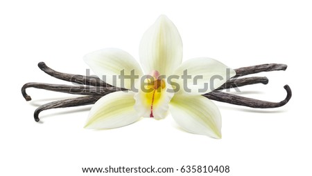 Vanilla flower pod symmetric composition isolated on white background as package design element
