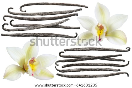Vanilla flower stick element set isolated on white background for package design