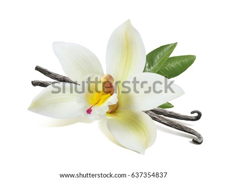 Vanilla flower sticks and leaves isolated on white background as package design element