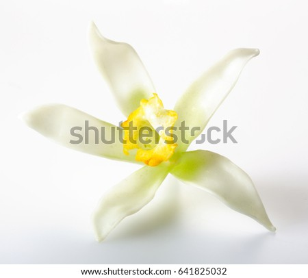 VANILLA FLOWERS ISOLATED ON GRAY