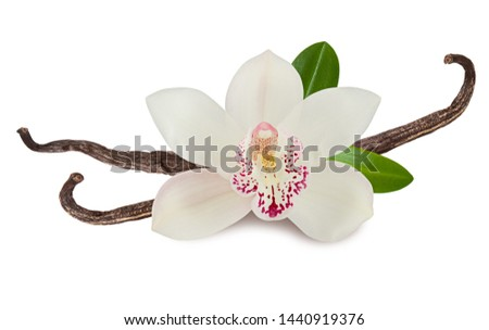 Vanilla plant isolated on white background. Orchid pink flower, stick or dry bean and green leaves