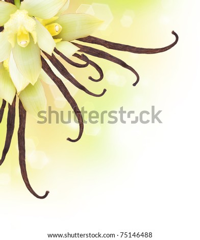 Vanilla Pods and Flower border design