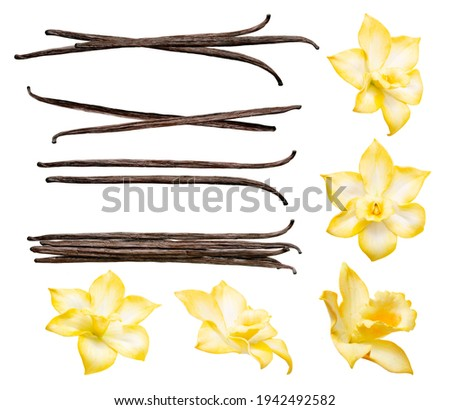 Vanilla pods and flowers set isolated on the white background. Collection of vanilla orhid flowers and vanilla sticks. Foto d'archivio ©