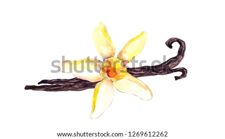 Vanilla pods and orchid flower. Watercolor