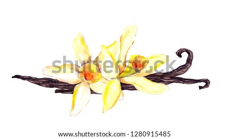 Vanilla pods and two orchid flowers. Watercolor