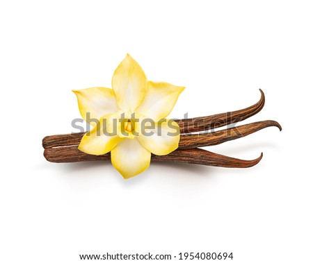Vanilla pods isolated. Dried vanilla sticks and vanilla flower on white background. Aromatic ingredient for baking. Foto d'archivio ©