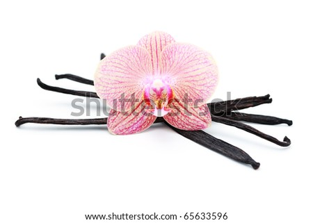 vanilla sticks with beauty orchid flower -  herbs and spices