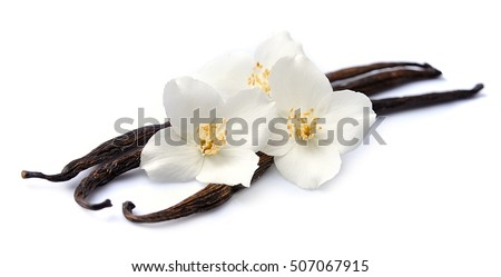 Vanilla sticks with flowers on white backgrounds. Foto d'archivio ©