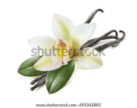 Vanilla sticks with leaves isolated on white background as package design element