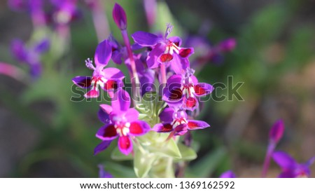 Vanrhynsdorp wild flowers