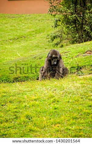 Variation of wildlife and domestic animals #1430201564