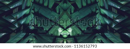 Variations Tropical Palm Leaves Background Flat Lay Top View Banner dark plant geometrical decor