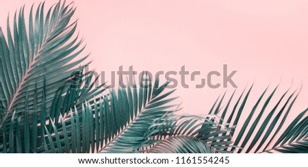 Variations Tropical Palm Leaves Background Flat Lay Top View Banner Toned pink turquoise trend colors