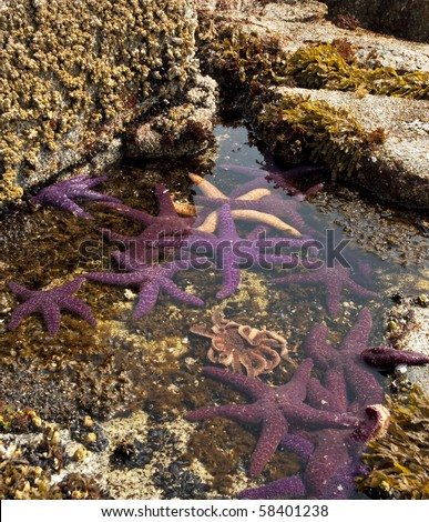 Varied group of starfish in a tide pool.