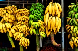 Varieties of bananas hanging on display in Kerala, South India. Bananas are a popular fruit here that is also used to make chips, vegetable dishes and deserts.