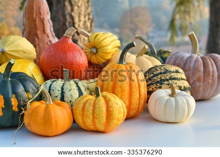 Varieties of pumpkins and squashes collection. Outdoor shot
