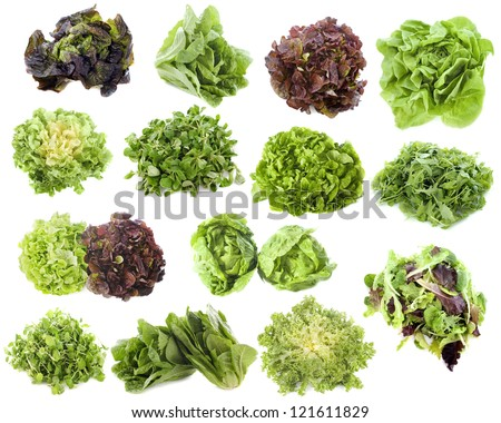 varieties of salads in front of white background