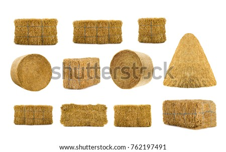 variety by hays isolated on a white background