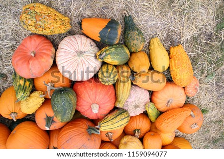 variety of bumpy and warted gourd at market place Stok fotoğraf ©
