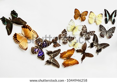 Variety of Butterflies over a white background. Image shot in flatlay style.